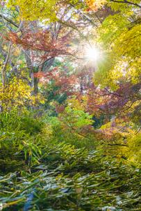 彩り豊かな盛秋の六義園の写真素材 [FYI04759902]