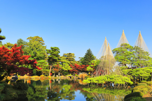 秋の金沢兼六園 霞ヶ池に唐崎松の雪吊りの写真素材 [FYI04759928]