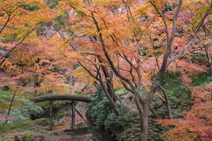 彩り豊かな盛秋の六義園の写真素材 [FYI04759934]
