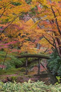彩り豊かな盛秋の六義園の写真素材 [FYI04759935]