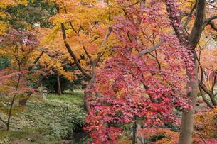 彩り豊かな盛秋の六義園の写真素材 [FYI04759939]