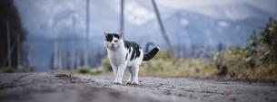 野良猫の写真素材 [FYI04759972]
