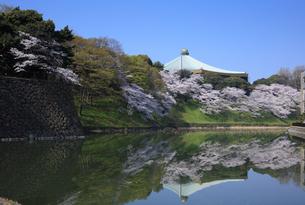 武道館の桜の写真素材 [FYI04760548]