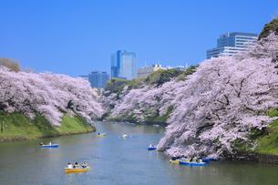 千鳥ヶ淵の桜の写真素材 [FYI04760549]