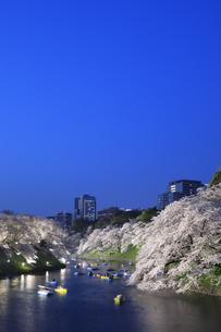 千鳥ヶ淵の桜の夜景の写真素材 [FYI04760551]