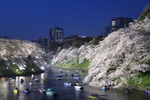 千鳥ヶ淵の桜のライトアップの写真素材 [FYI04760553]