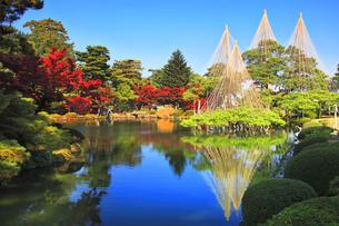 秋の金沢兼六園 霞ヶ池に唐崎松の雪吊りの写真素材 [FYI04760685]