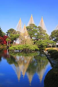 秋の金沢兼六園 霞ヶ池に唐崎松の雪吊りの写真素材 [FYI04760688]