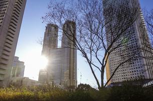 青空に映える都庁を中心に西新宿高層ビル街の写真素材 [FYI04760912]
