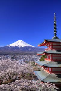 新倉山浅間公園の忠霊塔と桜と富士山の写真素材 [FYI04760929]