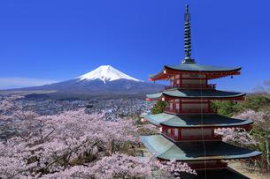 新倉山浅間公園の忠霊塔と桜と富士山の写真素材 [FYI04760931]