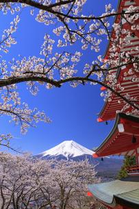新倉山浅間公園の忠霊塔と桜と富士山の写真素材 [FYI04760932]