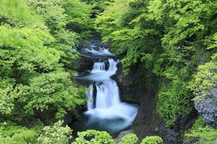新緑の鳳鳴四十八滝の写真素材 [FYI04760946]