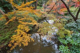 彩り豊かな盛秋の六義園の写真素材 [FYI04760982]