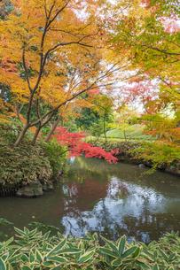 彩り豊かな盛秋の六義園の写真素材 [FYI04760985]