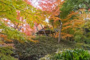 彩り豊かな盛秋の六義園の写真素材 [FYI04760994]