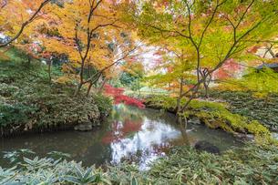 彩り豊かな盛秋の六義園の写真素材 [FYI04761000]