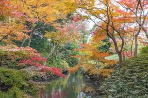 彩り豊かな盛秋の六義園の写真素材 [FYI04761004]