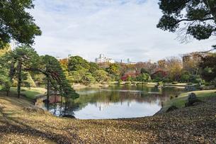彩り豊かな盛秋の六義園の写真素材 [FYI04761011]