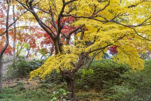 彩り豊かな盛秋の六義園の写真素材 [FYI04761024]