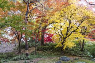 彩り豊かな盛秋の六義園の写真素材 [FYI04761027]