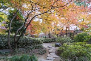 彩り豊かな盛秋の六義園の写真素材 [FYI04761036]