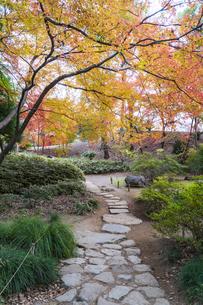 彩り豊かな盛秋の六義園の写真素材 [FYI04761039]