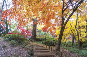 彩り豊かな盛秋の六義園の写真素材 [FYI04761041]