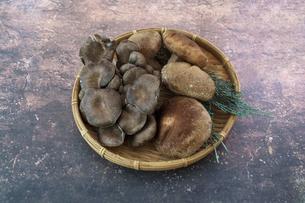 笊に盛った平茸と椎茸の写真素材 [FYI04761058]