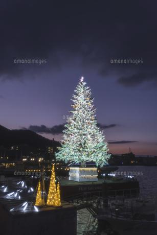 夕暮れのクリスマスツリーの写真素材 [FYI04761070]