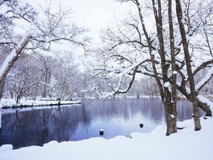 冬の鳥沼公園の写真素材 [FYI04761299]