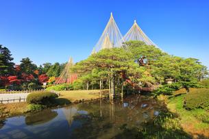 北陸金沢 兼六園の紅葉と松の雪吊りの写真素材 [FYI04761602]