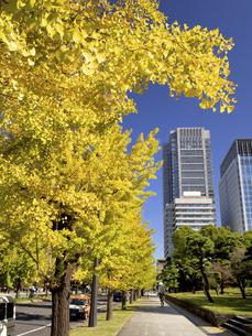 東京都 丸の内オフィスビル街とイチョウ並木 の写真素材 [FYI04761715]