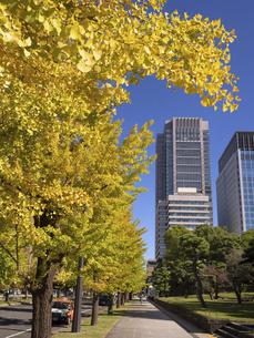 東京都 丸の内オフィスビル街とイチョウ並木 の写真素材 [FYI04761716]