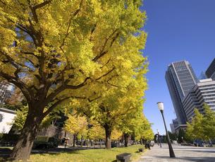 東京都 丸の内オフィスビル街とイチョウ並木 の写真素材 [FYI04761717]