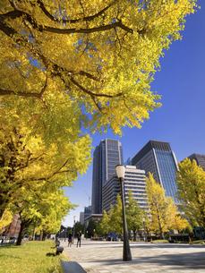 東京都 丸の内オフィスビル街とイチョウ並木 の写真素材 [FYI04761718]