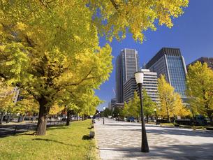 東京都 丸の内オフィスビル街とイチョウ並木 の写真素材 [FYI04761719]