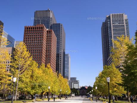 東京都 丸の内オフィスビル街とイチョウ並木 の写真素材 [FYI04761720]