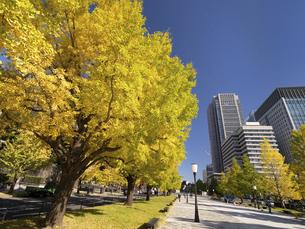 東京都 丸の内オフィスビル街とイチョウ並木 の写真素材 [FYI04761722]