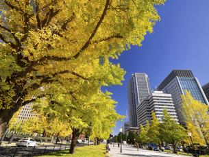 東京都 丸の内オフィスビル街とイチョウ並木 の写真素材 [FYI04761723]