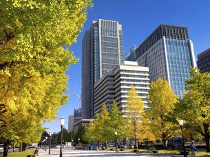 東京都 丸の内オフィスビル街とイチョウ並木 の写真素材 [FYI04761724]