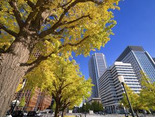 東京都 丸の内オフィスビル街とイチョウ並木 の写真素材 [FYI04761725]