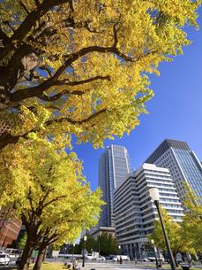 東京都 丸の内オフィスビル街とイチョウ並木 の写真素材 [FYI04761726]