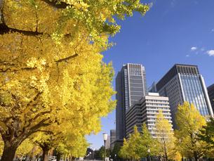 東京都 丸の内オフィスビル街とイチョウ並木 の写真素材 [FYI04761727]