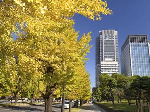 東京都 丸の内オフィスビル街とイチョウ並木 の写真素材 [FYI04761728]