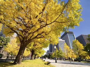 東京都 丸の内オフィスビル街とイチョウ並木 の写真素材 [FYI04761729]