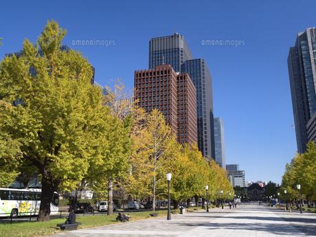 東京都 丸の内オフィスビル街とイチョウ並木 の写真素材 [FYI04761730]