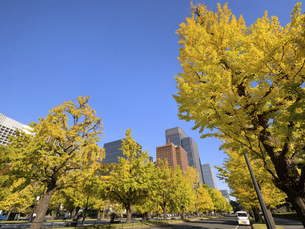 東京都 丸の内オフィスビル街とイチョウ並木 の写真素材 [FYI04761737]
