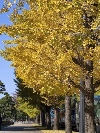 東京都 黄葉した丸の内のイチョウ並木の写真素材 [FYI04761740]
