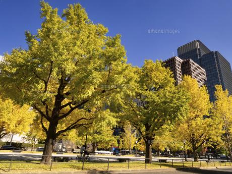 東京都 黄葉した丸の内のイチョウ並木の写真素材 [FYI04761743]